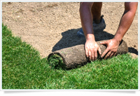 Calgary Sod and Tree Installation