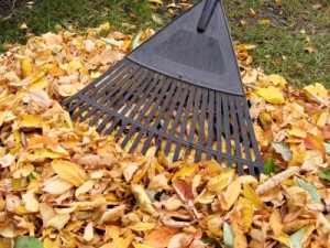 Fall CleanUp 101 - Top 10 Fall MUST-DO'S Before the Snow Flies