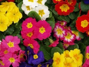 Best Plants for Your Calgary Garden