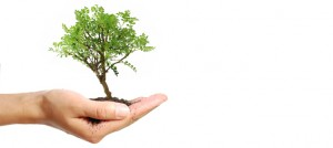 Mirage Landscaping Contractors: Protect Your Calgary Business's Trees
