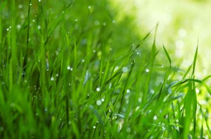 Lawn Care Tips For Home Properties