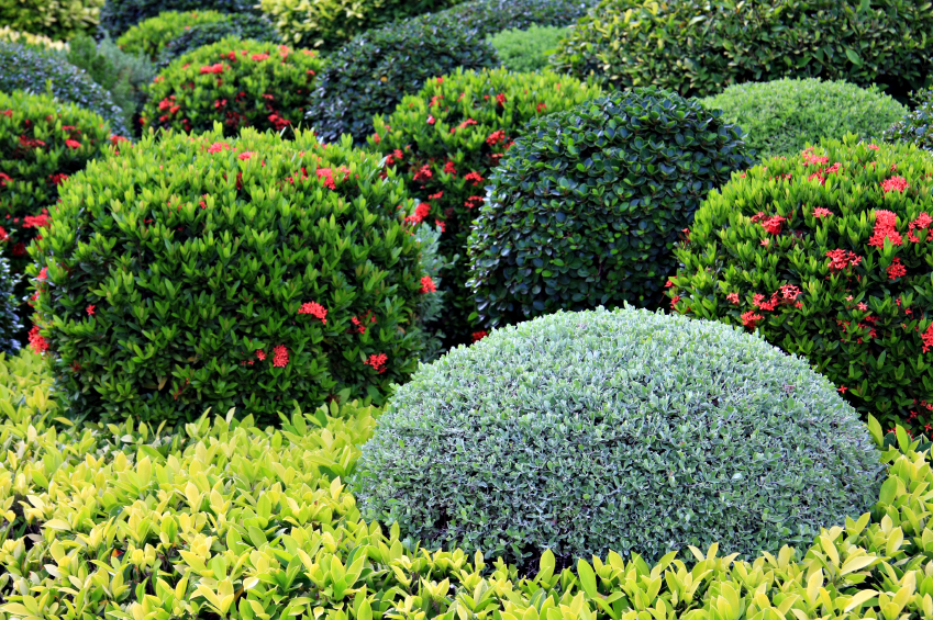What are the best shrubs for my calgary garden for Garden plants names and pictures