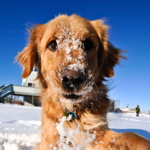 Saving Your Calgary Lawn From Pet Damage in the Winter: Mirage Landscaping
