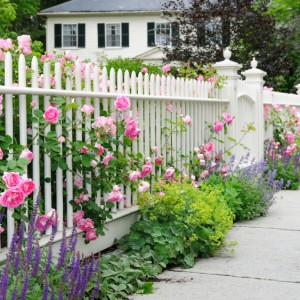 Beautiful Yards Year-Round