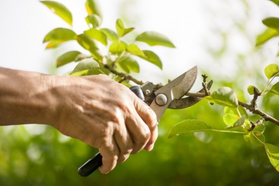 Sometimes Tree Pruning is Like Emergency Surgery