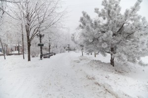 Questions to Ask Your Potential Snow Removal Contractor