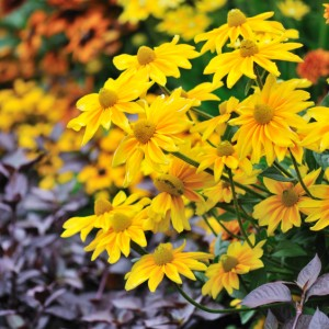 What To Do With Your Annuals in the Fall