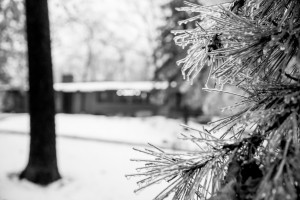 Making Your Yard or Business Beautiful this Winter