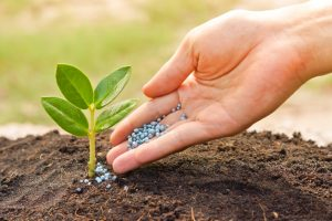 How Fertilizer and Compost Work