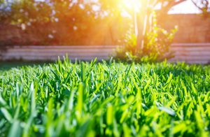 How to Repair Your Lawn and Green Space