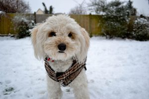 Repairing Winter Pet Damage in Your Yard