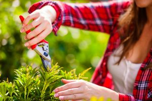 Tree and Shrub Care Before Spring