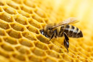 How to Attract Bees to Your Calgary Yard