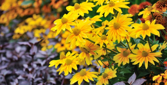 Calgary Landscape Design Tips and Tricks for Dealing With Your Annuals