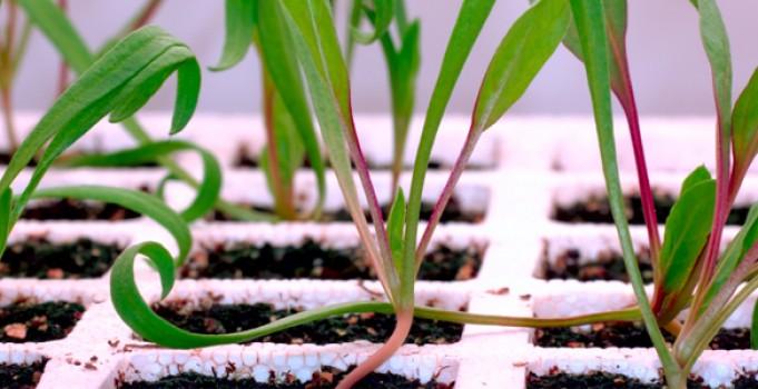 Calgary Landscapers: Start Your Outdoor Garden Indoor