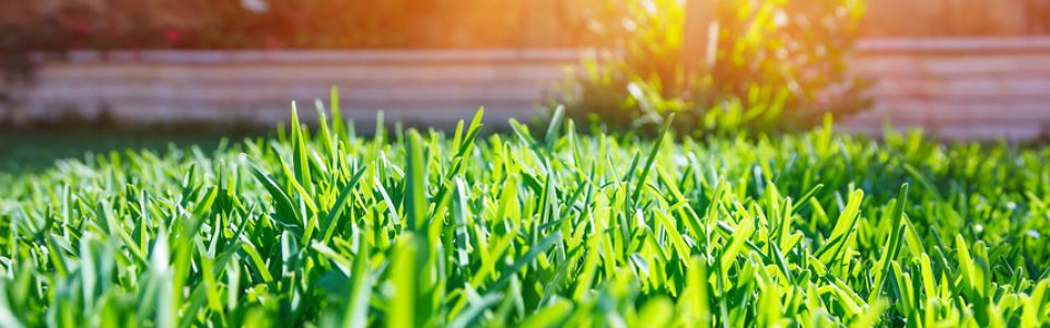 Get a Lush, Green Lawn With Maintenance By Mirage