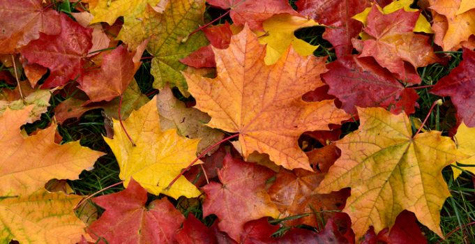 Fall is a Great Time to Tackle Your Landscaping Projects