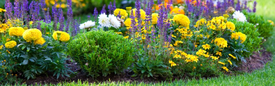 Which Perennials Are Best for Calgary Gardens?