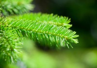 Growing Grass Under Your Spruce Tree: Calgary Lawn Care and Landscape Design