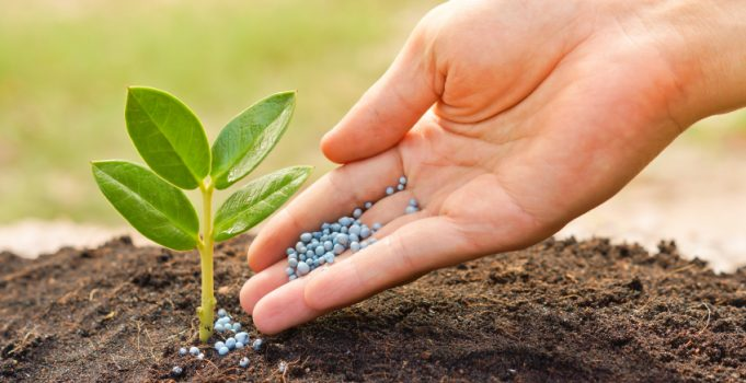 Calgary Landscaping for the Frugal: Plan Ahead and Save