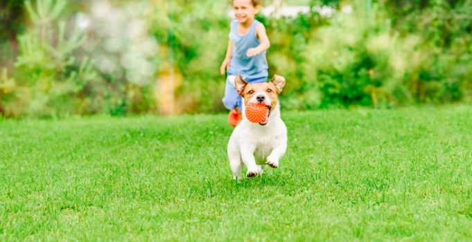 How to Make A Dog-Friendly Yard for Your Best Buddy