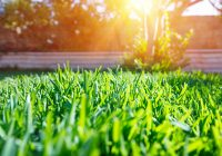 August Lawn Care Tips From the Pros