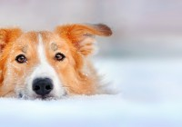 Keeping Your Lawn and Your Pet Happy and Healthy This Winter