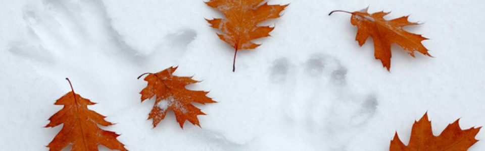 Leaves and Snow: Remember to clean your up your leaves!