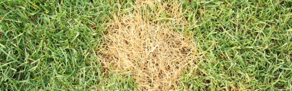 Make Dead Patches in Your Lawn Disappear