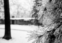 Mirage Landscaping of Calgary: Making Your Yard or Business Beautiful this Winter