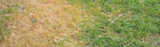 Patchy, Yellow Grass? Here's How We Fix it.