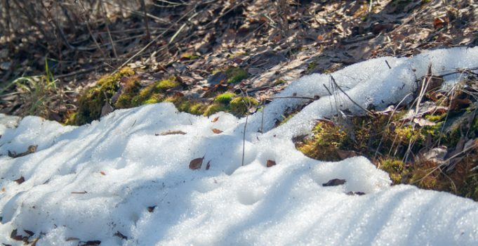 Snow Mould a Major Problem in Calgary