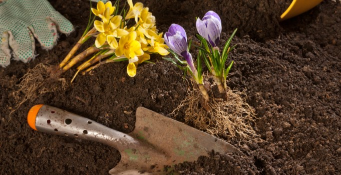 Schedule Your Spring Clean Up Early! Mirage Landscape Design of Calgary