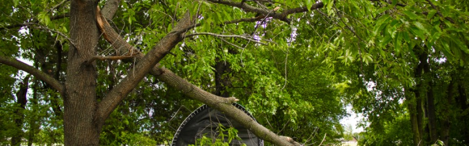 Stay Safe While Dealing With Downed Trees and Branches