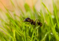 Lawn Care in Calgary By Mirage: The Agony of Ant Infestations