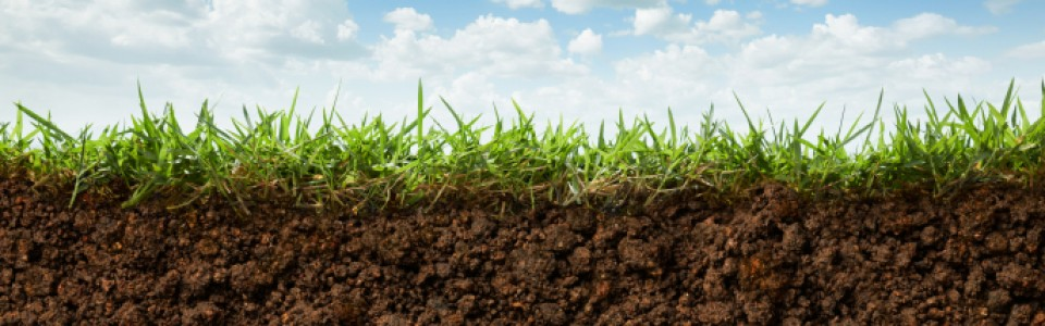 How to Measure Your Soil Quality