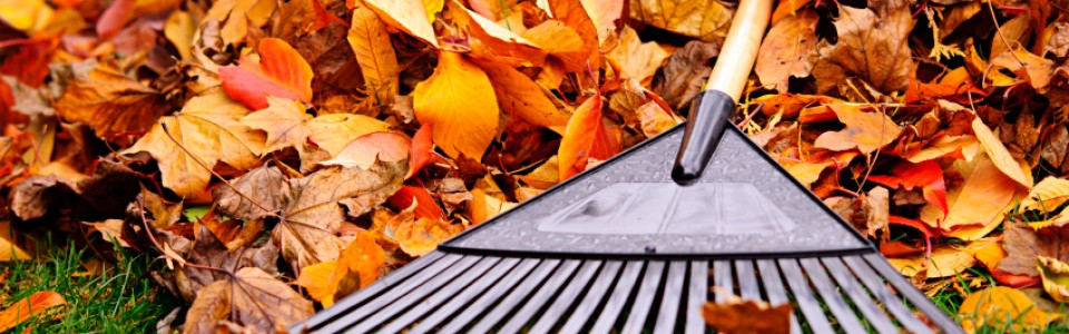 Schedule Your Fall Clean-Up Now