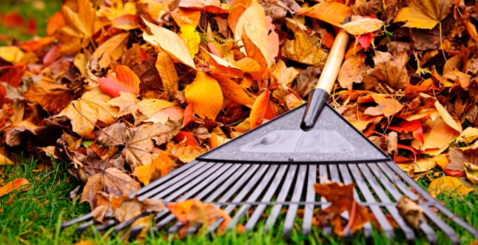 Fall Lawn Care Tips and Tricks