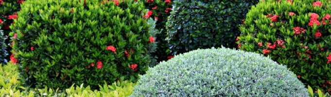 Calgary Commercial Landscape Design: Tips for Your Business's Green Space