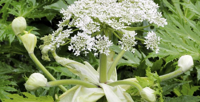 Toxic Plants and Plants That Can Cause Adverse Reactions