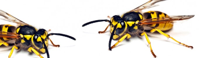 Mirage Landscaping Calgary: How Do I Get Rid of Wasps?