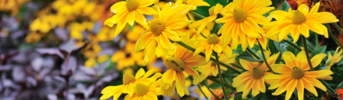 Extend the Life of Your Annuals into September