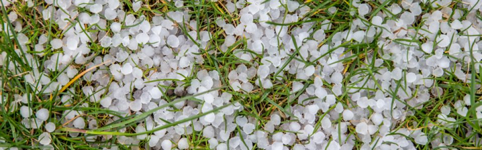 What to do About Hail Damage to Your Garden or Green Space
