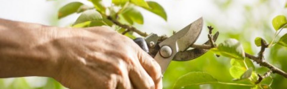 Why You Should Hire a Professional Pruner