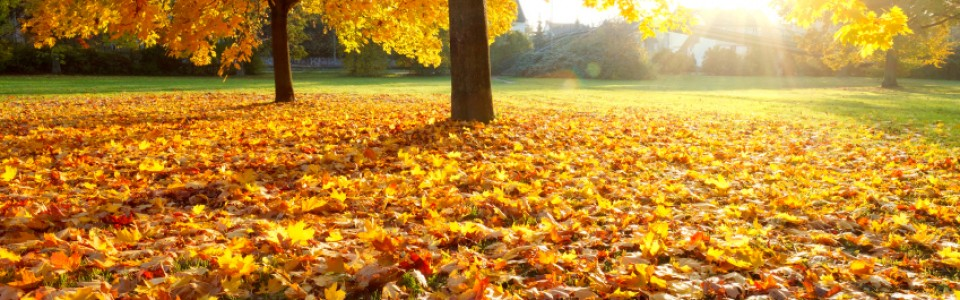 Why Leaves Drop and What Their Job Is