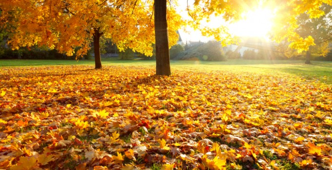 Top Ten Fall Landscaping Mistakes Many People Make