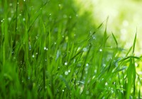 Lawn Care Tips For Home Properties: Landscape Design in Calgary