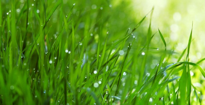 Mirage Landscaping of Calgary: Keep Your Grass Green