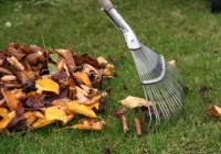 Mirage Landscaping in Calgary: It's Fall-Clean Up Time!