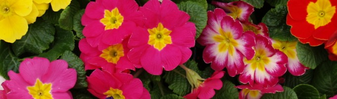 Best Plants for Your Calgary Garden